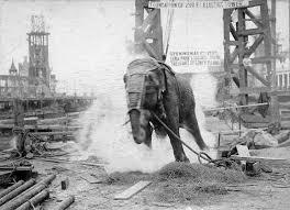 execution chaise electrique topsy l éléphante sur la chaise électrique