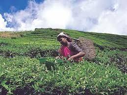 الشاي الماليزيMALAYSIAN TEA Images?q=tbn:ANd9GcRP3irbdyb1Q1SsG2k_B3eRtvOpp0cUIDRdTKh8P76dOR3WcjtyMA