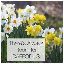 Ideas For Daffodil Varieties Design with There U0027s Always Room For Daffodils Longfield Gardens