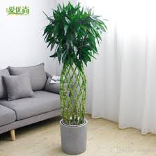 discount decorative trees pots 2017 decorative trees pots on