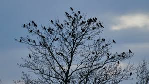 flock of birds sitting autumn on a tree branches of