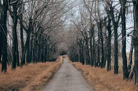 walkway trees bossfight