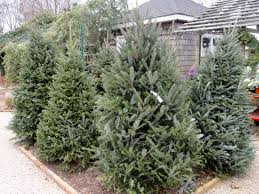 15 places to buy a tree east hton ny patch