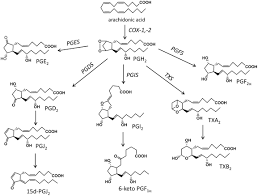 frontiers polyunsaturated fatty acid derived lipid mediators and
