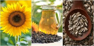 to grow the best sunflowers 7 wonderful uses for the entire plant