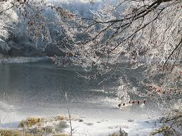 free photo frosted trees ripe frozen lake frosted branches max pixel