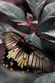 Flowers For Birds And Butterflies - 1148 best butterflies and flowers images on pinterest beautiful