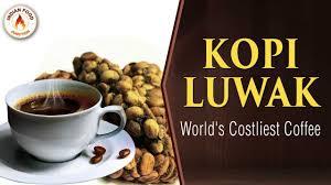 Luwak Coffee kopi luwak worlds most expensive coffee luwak coffee civet