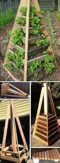 409 best urban gardening images on pinterest gardening plants