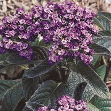 12 Best Annual Flowers For by 170 Best Annuals Images On Pinterest Flower Gardening Annual