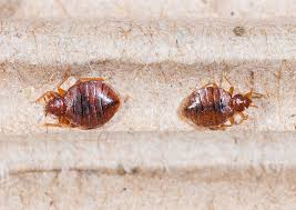 Bed Bug Com St Louis Bed Bug Control Get Your Bed Bugs Treated And Gone Forever
