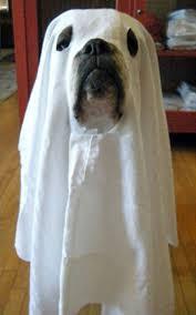 10 cutest animal halloween costumes spin1038