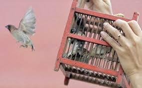 uccelli in gabbia curiosity uccelli in gabbia asianworld forum