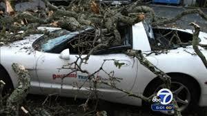 damaged corvettes for sale damaged tree falls on a c5 corvette in california