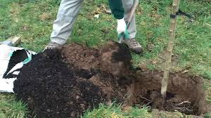 how to plant a tree planting bare root trees