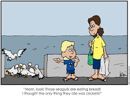 Finding Nemo Seagulls Meme - beckstrom buzz august 2013