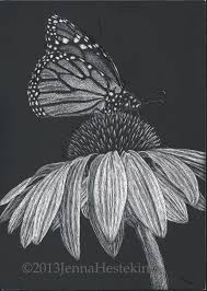 monarch butterfly scratchboard the cozy red