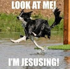 Stupid Animal Memes - 15 best hondenhumor images on pinterest funny animals funny
