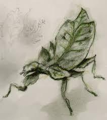ali shaw u0027s blog leaf insects