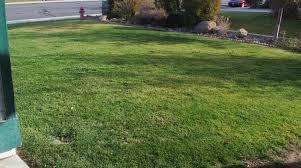 garden solutions for the high desert lawn care in the high desert