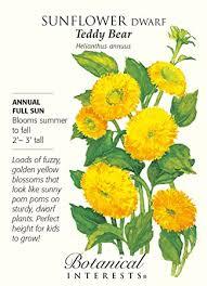 teddy sunflowers teddy sunflower seeds 1 gram helianthus