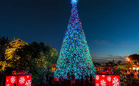 Singing Christmas Tree Lights Seaworld U0027s Christmas Celebration Seaworld San Diego