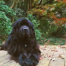 belgian shepherd malinois pronunciation 19 dog breed names that are not easily pronounced