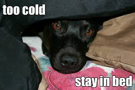 Stay In Bed Meme - too cold stay in bed colderroy quickmeme