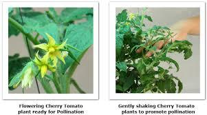 national indoor gardening month pollination