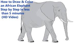 how to draw u0026 color an african elephant step by step in less than