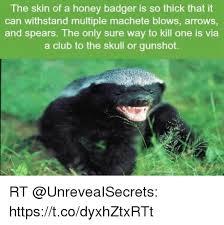 Honey Badger Memes - 25 best memes about honey badgers honey badgers memes