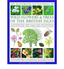 flower encyclopedia illustrated encyclopedia of flowers and trees of the