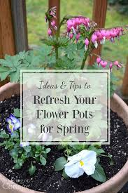 ideas u0026 tips to refresh your flower pots for spring tuesdays in