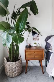 best 25 palm plants ideas on pinterest palm house plants