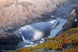 Fort Bragg Botanical Garden The Blue Whale In Fort Bragg