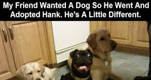 Funny Dog Face Meme - dog making a funny face hitsharenow