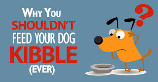 kibble why it u0027s not a good option for your dog dogs naturally