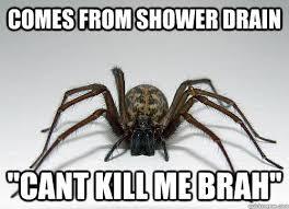 Shower Spider Meme - comes from shower drain cant kill me brah endangered spider