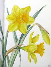 botanical sketches and other stories daffodil days
