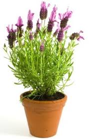 Plants For Bedroom The 10 Best Plants To Have In Your Bedroom To Help You Sleep Better