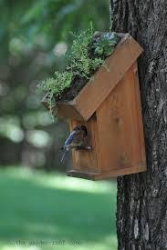 Cool Bird House Plans by Best 25 Blue Bird House Ideas Only On Pinterest Bluebird Houses