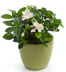 best plant for office the 6 best plants for a healthy office the loszach blog