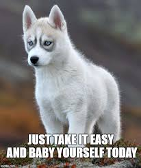 Angry Wolf Meme Generator - awesome 21 wolf meme generator wallpaper site wallpaper site