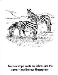 tiger coloring pages coloring pages for pinterest