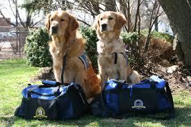 Comfort Retrievers Like Furry Counselors U0027 Comfort Dogs Deployed After Boston Bombings