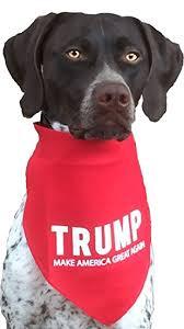 bandana for medium to large dogs pet