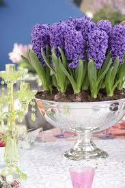 Fragrant Container Plants - 92 best bulbs in containers images on pinterest bulbs outdoor