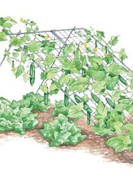 cucumber trellises gardening pinterest cucumber trellis