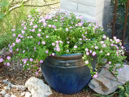 Heat Tolerant Plants Lantana Made 2 For The Top 10 Heat Resistant Plants In Arizona
