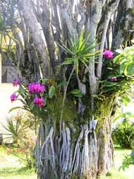 Orchids Care Orchid Care For Beginners
